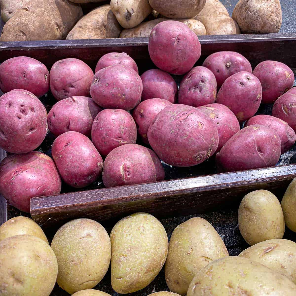 Image showing 3 types of potatoes that are good for roasting.